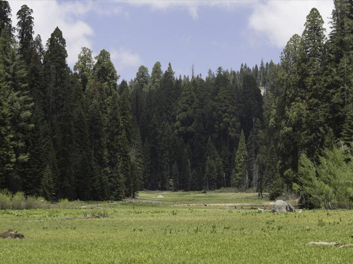 crescent-meadow